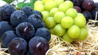 【ブドウについて】品種 選び方 収穫量 食べ方 徹底解説